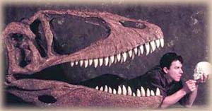 Carcharodontosauridae.jpg