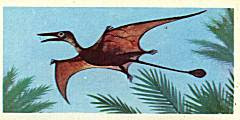 Rhamphorhynchoidea1.jpg
