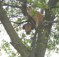 Jasper in tree