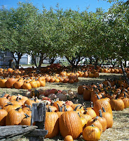 field of big pumpkins at Hemmeter's Market