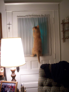 Jasper climbing up the curtain on the livingroom door