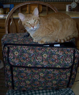 Jasper on my suitcase