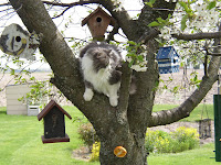 Annie in the cherry tree