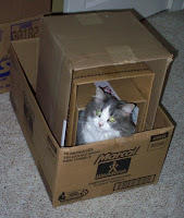Annie loves to be in boxes