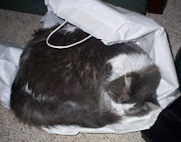 Annie sleeping on the shopping bag