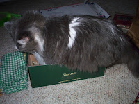 Annie, trying a different way into the shoe box