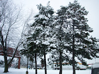 trees covered with snow outside the motel
