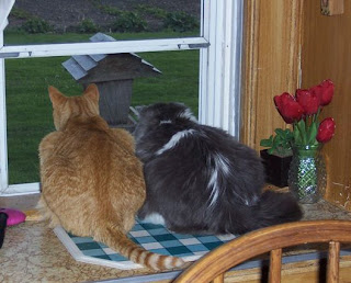 Jasper and Annie looking out the kitchen window at the bird feeder