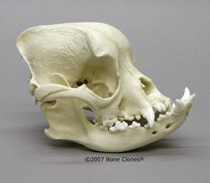 bravo-teen-cranium-swabbed