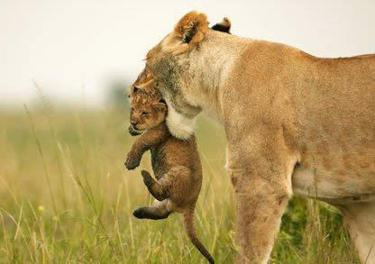 Amor de madre. Fotos-bonitas-3