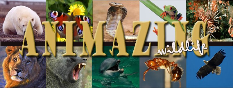 ANIMAZING wildlife