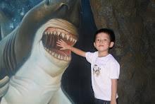 Shark attack!!!
