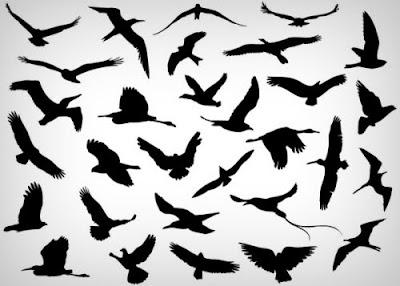 vectores gratis de alta calidad aves