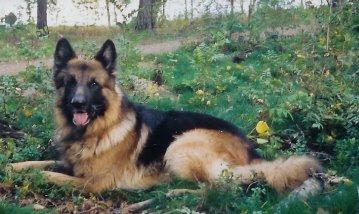 Saknar- Jacken min älskade hund.