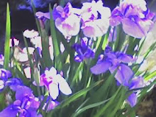 Irises--Japanese Tea Gardens