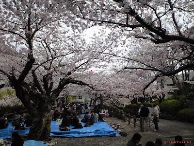 Taman Bunga Sakura