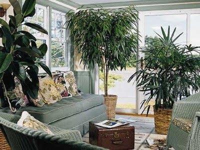 Τα φυτα εσωτερικου χωρου οχι μονο