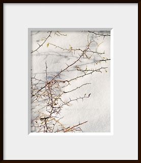 A framed photo of a jagged bare bush pokes through the fresh snow providing a contrast between the soft snow and sharp thorns.