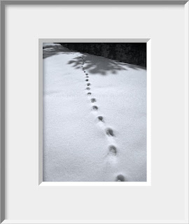 A framed photo of the tracks of a solitary bobcat on a hunt undetected by man or mouse.