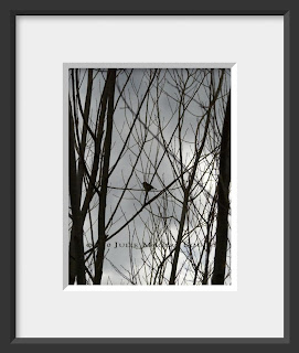 A framed photo of the silhouette of a single small bird perched in the bare branches of a tree is waiting patiently for the arrival of spring.
