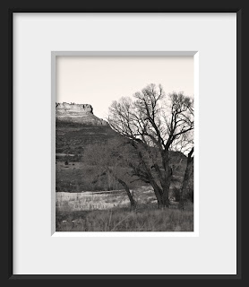 A framed photo of an ancient cottonwood tree guards the entrance to the valley into Redstone Canyon with its trademark red mesa in the background.