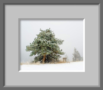 A framed photo of an ancient and twisted ponderosa pine has withstood time and the severe weather on a mountaintop in Colorado.