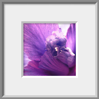 The light catches the delicate purple frills and folds of an iris in this framed close up photo painting.