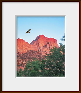 A framed photo of a lone red tailed hawk soars overhead as the sun sinks and lights up the red cliffs of Zion National Park