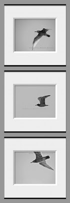 Set of 3 black and white seagull photos