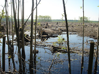 More clearcut marshland