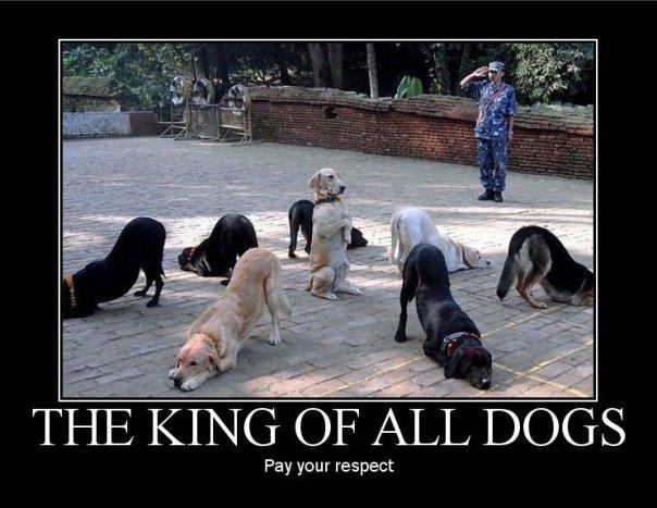 Boss Bungou Stray Dogs Cats
