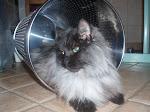 Min katt