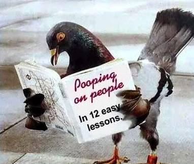 http://1.bp.blogspot.com/_B7iJN32O15U/SKZxyE-0QGI/AAAAAAAAAQg/V42NDjI7vZU/s400/2261-Cool+Funny+Pictures+-+Photos+-+Hilarious+-+Humor+-+Images+-+.jpg