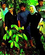 Satu Ekosistem Hutan Sumatra