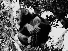 primate moment pet