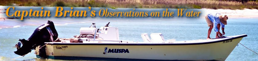 Capt. Brian's observations on the water