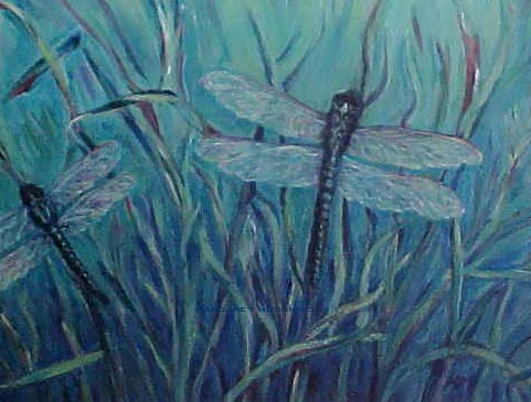 Dragonflies (Prints available)