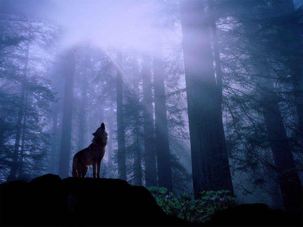 Estrellitas y Duendes.: El lobo y la luna