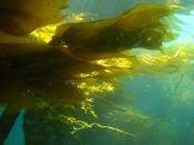 zee wier