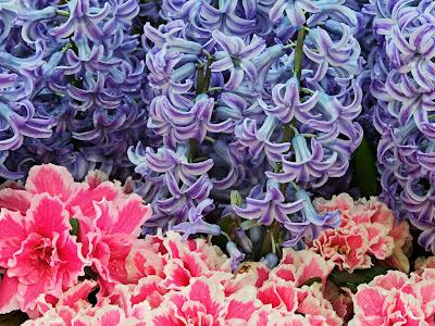 Beautiful Flowers wallpapers, Beautiful Flowers images, Beautiful Flowers pictures, Beautiful Flowers photos, Beautiful Flowers photogallery, Beautiful Flowers