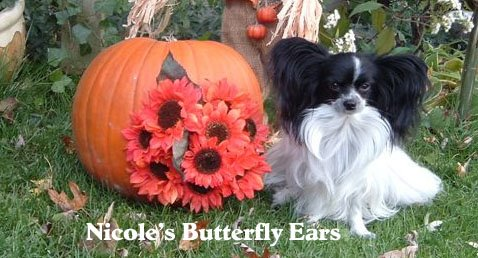 Nicole's Butterfly Ears