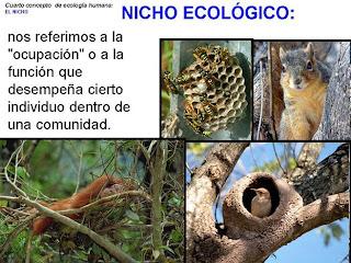 Deficion Nicho ecologico