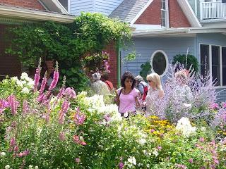 A Summer Street garden