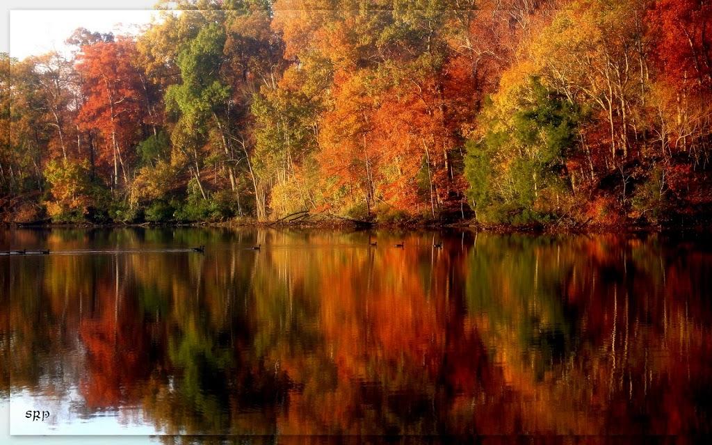 Mélange: Autumn Serenity