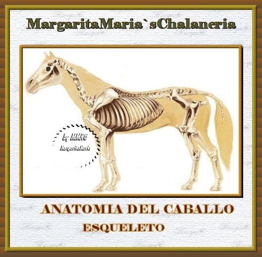 MargaritaMaria`s-Chalaneria: Caballo-Anatomia-Esqueleto