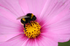 Bread feeds my body.....bees feed my soul.