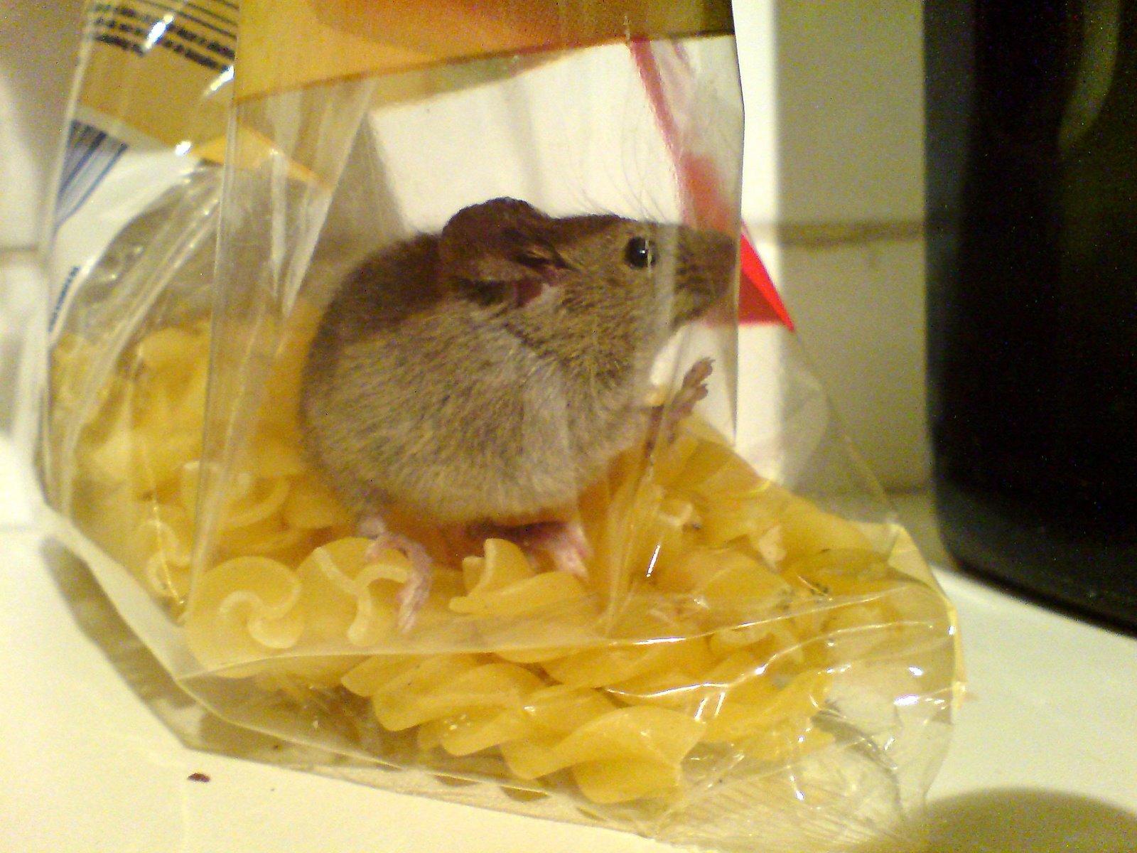 fusilli mouse 2