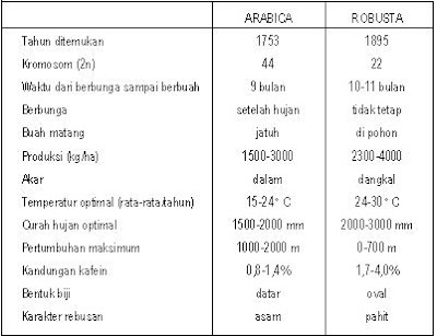 perbedaan kopi robusta arabika
