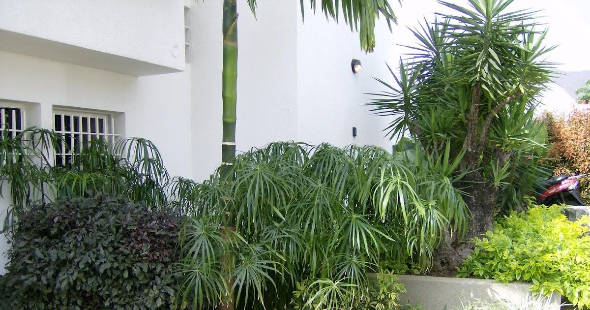 Jard n bamb c a jardines de residencias for Jardin bambu