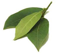 Daun Salam (Bay Leaves)